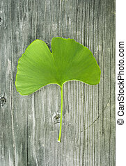 ginkgo leaf on old wood