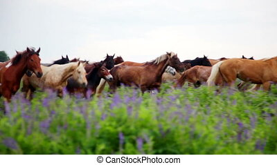 Horses in meadow - Herd of horses grazing freely on green...