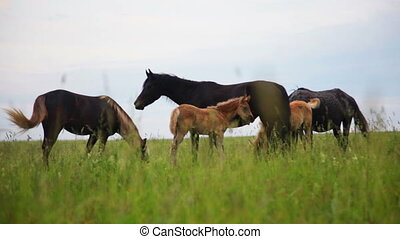 Herd of horses in the pasture