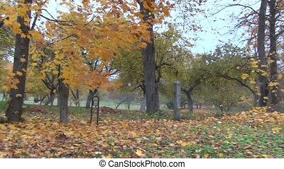 tree autumn landscape - autumn landscape colorful leaves on...