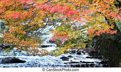 the fall season, Japan for adv or others purpose use
