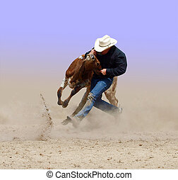 Man Versus Beast - Cowboy wrestling with a steer. Isolated...