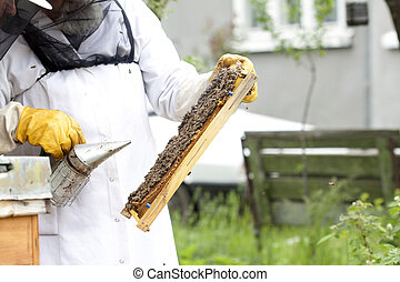 Working apiarist - Beekeeper holding a frame of honeycomb