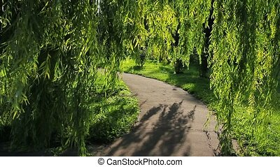Weeping willow - Footpath and weeping willow in the park.