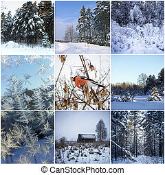 Winter collage - Beautiful winter collage of eight pictures...