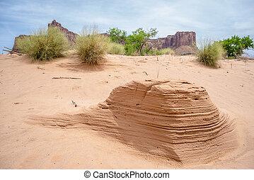 Desert flowers and Ant hills near White Rim Road Moab Utah -...