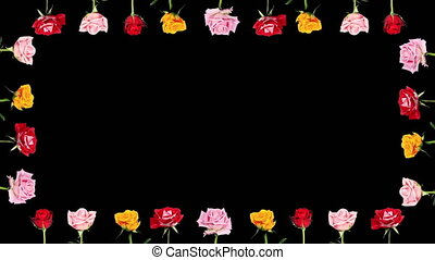 Frame of blooming roses