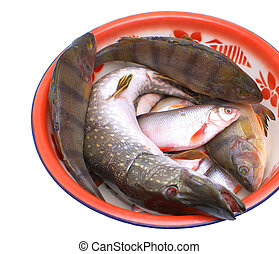 Freshwater fish. - Fresh edible fish in the plate on a white...