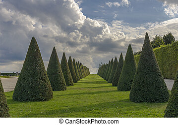 conical hedges lines and lawn, Versailles Chateau, France -...