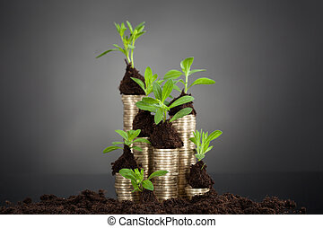 Saplings On Stack Of Coins At Desk - Saplings on stack of...