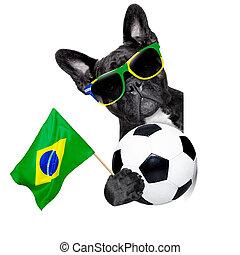 Brasil, futebol, cão