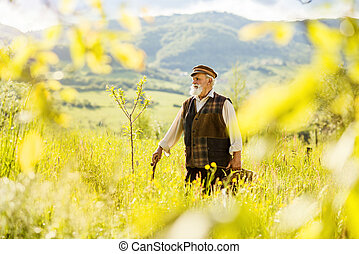 Old farmer on the meadow - Old farmer with beard is walking...