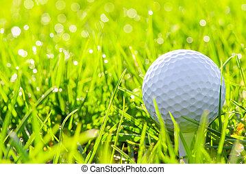 macro of a golf ball in green grass