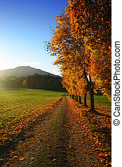 bavarian landscape with maple trees in autumn at sunset