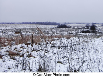 Snow-covered field - Winter landscape with a gray sky and...