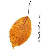 秋, 季節, 葉, 隔離された