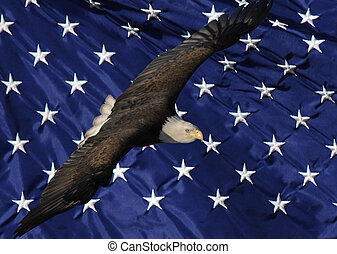 Bald Eagle and Stars