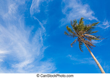 Beautiful tropical beach with coconut palm tree,