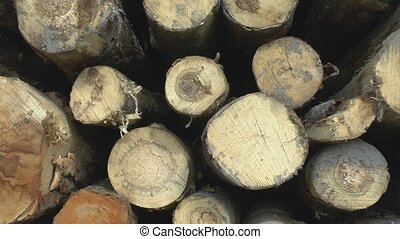 Sawed tree trunks - The camcorder is moving next to sawn...