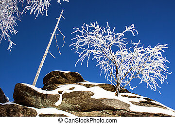 Winter Scene - Frozen Tree on the Top pf Mountain - Rock