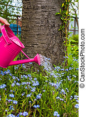 Plant Care Watering spring flowers garden - Plant Care:...