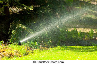 Gardening Lawn sprinkler spraying water over grass -...