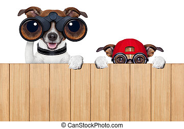 two nosy dogs - binoculars dog searching, looking and...