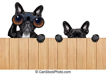 two nosy dogs - father and son dogs spying behind wood fence...