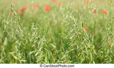 Wild grass field.