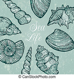 Vector background with sea shells - Beautiful background...