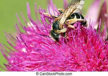 bee on flower summer season