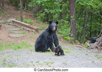 Mother bear and cub - Mother bear sitting down looking at...