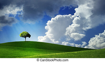 Lonely tree on green filed, blue sky and white clouds