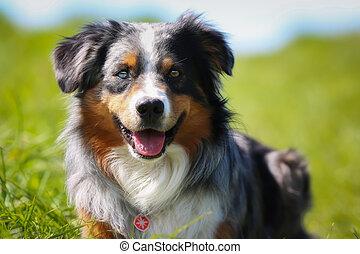 Purebred dog - Shot of purebred dog. Taken outside on a...