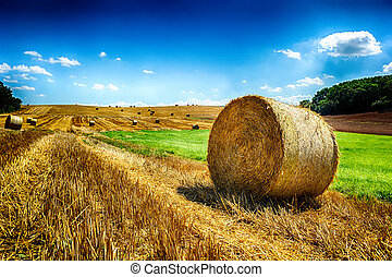 Golden hay bales at agricultural field after harvest