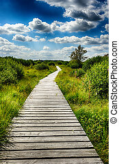 Summer landscape with wooden walkway