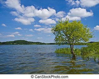 tree in a lake landscape