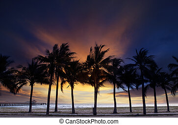 beautiful twilight sky and dusky with silhouete coconut tree...