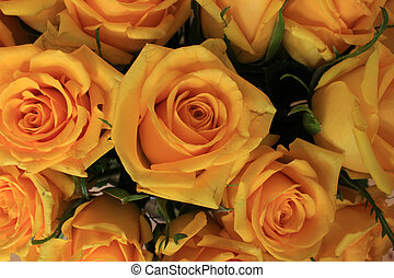 Bouquet of Yellow Roses - A bouquet of yellow long stem...
