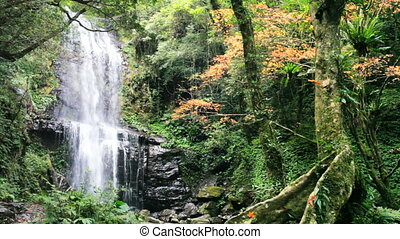 waterfall in autumn season, Taiwan