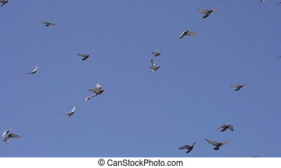 Birds in Flight - Flock of birds flying right against the...