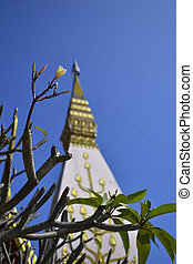 Frangipani and Pagoda at Wat Lat Pu Song Tum Phrathat Satcha