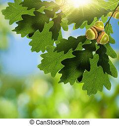 Oak foliage with acorn as beauty environmental backgrounds