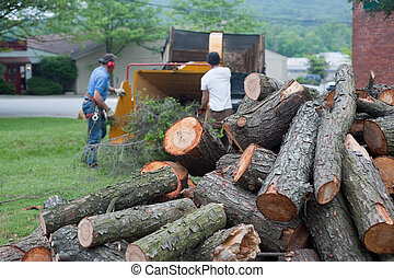 cut logs in a pile waiting to be ground up