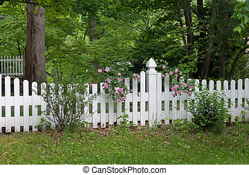 fence with roses - roses growing on white picked fence