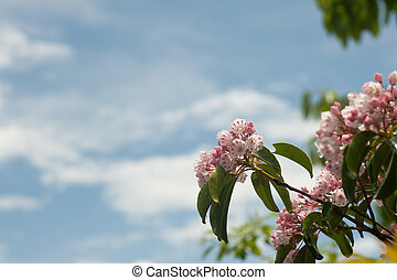 Mountain Laurel plant with sky behind with room for copy