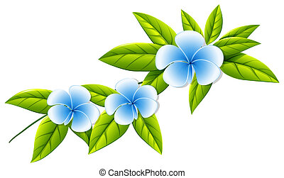 Blooming white flowers - Illustration of the blooming white...