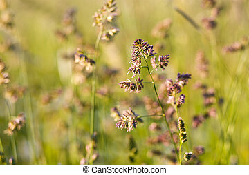 Tall plants grass bending by the wind