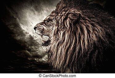 rugido, león, contra, tempestuoso, cielo