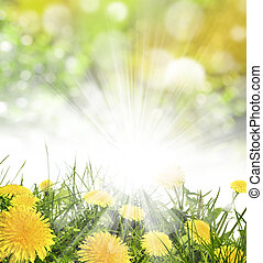 spring background - Under the bright sun. Abstract natural...